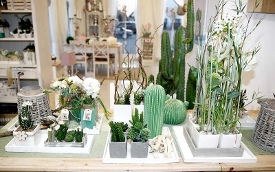 deko_fruehling_ostern_42_kaktus_succulente_topf_vase_keramik