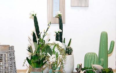 deko_fruehling_ostern_45_kaktus_succulente_topf_vase_keramik_holzbrett
