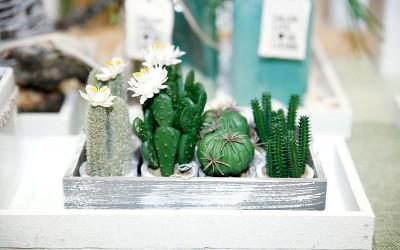 deko_fruehling_ostern_49_kaktus_succulente