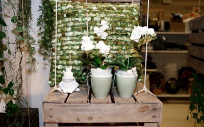 deko_fruehling_ostern_58_gruen_frosch_keramik_blumentopf_orchidee_kissen