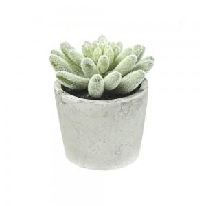 deko-willenborg-kaktus-succulente-beton-topf