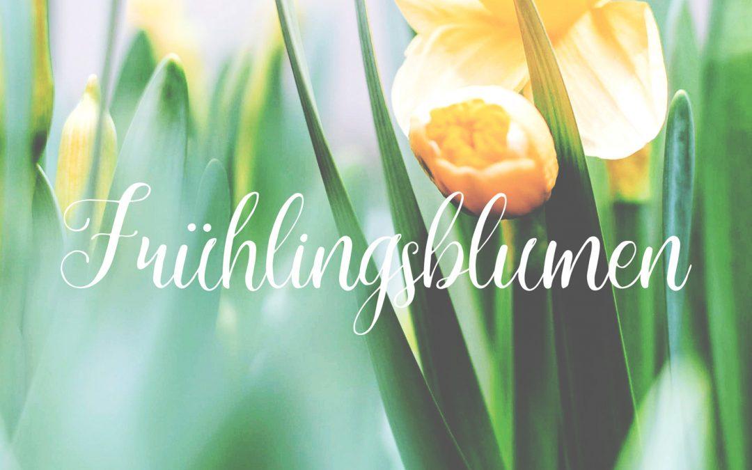 Unsere neuen Frühlingsblumen