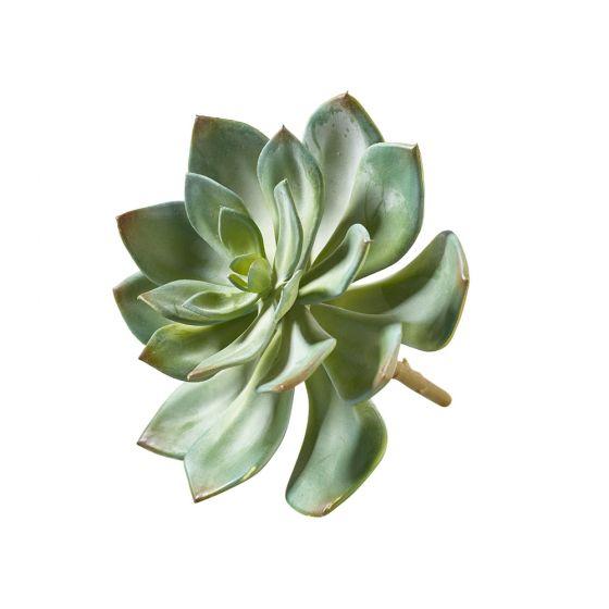 Succulenten-Pick