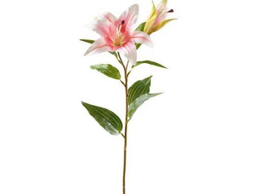 Lilie mit 2 Blüten